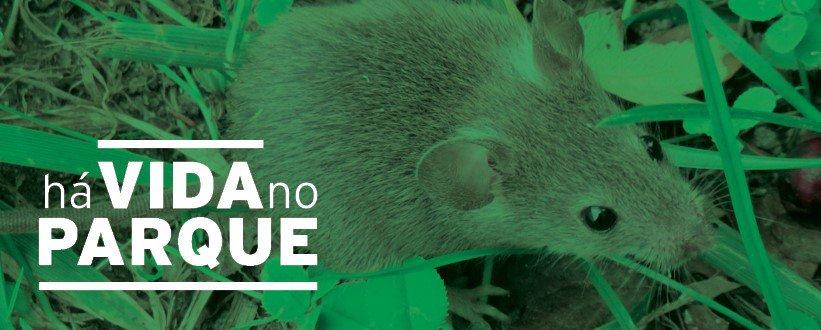 Há vida no Parque! Os ratinhos e musaranhos inserem-se no grupo dos micromamíferos