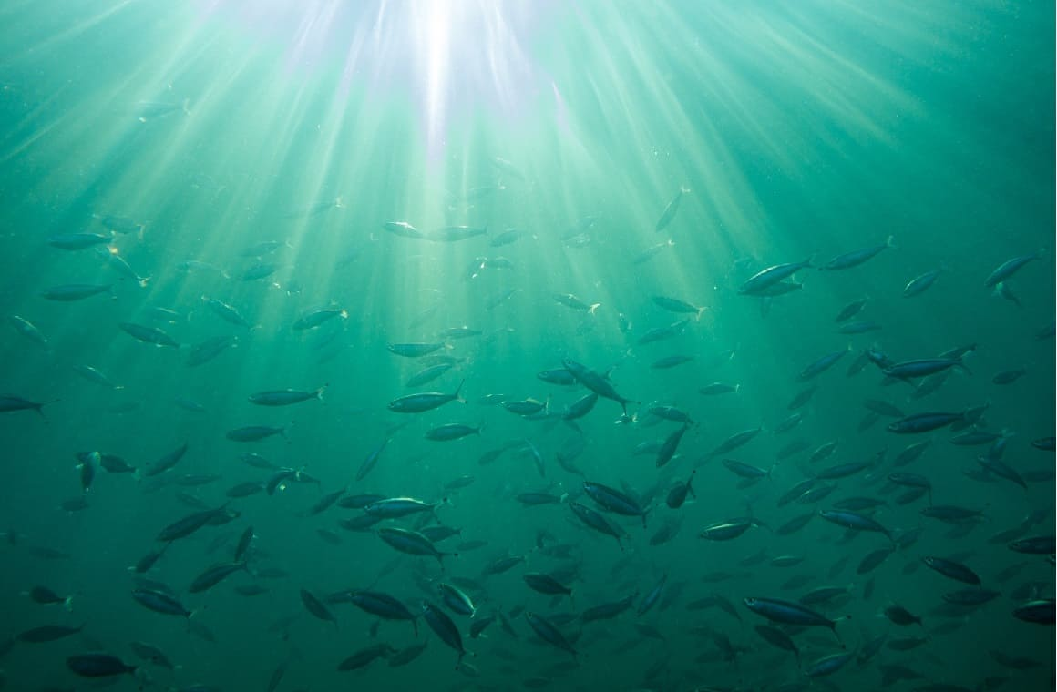 Os Hotéis da cadeia Marriott, nas suas nove unidades em Portugal, apresentam agora nos seus restaurantes, uma nova ementa mais responsável para com os oceanos, fruto de um trabalho pioneiro realizado em parceria com a organização de conservação da natureza Associação Natureza Portugal, em associação com a WWF (ANP WWF).