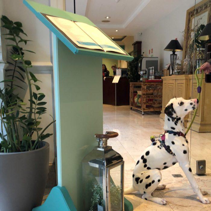 O Lisbon Marriott Hotel é Pet Friendly! Se gosta de levar o seu animal de estimação para todo o lado, neste excelente hotel, o seu amigo de quatro patas é bem-vindo.